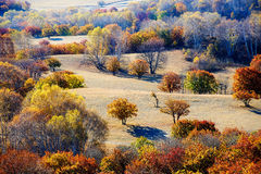 The autumn forest on the meadow Stock Image