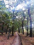Autumn Forest med går banan arkivbilder