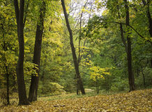 Autumn forest Stock Images