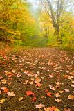 Autumn forest in a mist Royalty Free Stock Image