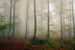 Autumn forest in the mist Royalty Free Stock Photography