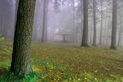 Autumn forest in the mist Royalty Free Stock Photos