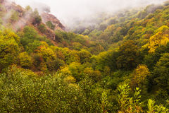 Autumn forest mist. Forest wood with yellow foliage trees in mountain area by an autumn morning covered by mist fog Royalty Free Stock Images
