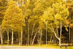Autumn Forest mit schönen Bäumen lizenzfreie stockfotos