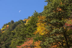 Autumn forest and moon Stock Image