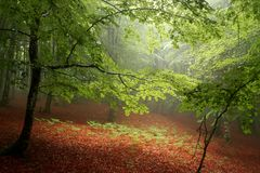 Autumn forest in the morning Stock Photos