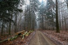 Autumn forest. Morning fog in the autumn forest.  royalty free stock images