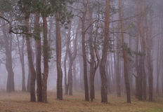 Autumn forest in the morning . Stock Photo