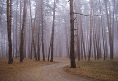 Autumn forest in the morning mist Stock Photography