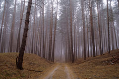 Autumn forest in the morning mist Royalty Free Stock Image