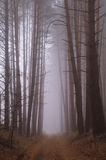 Autumn forest in the morning mist Royalty Free Stock Photos
