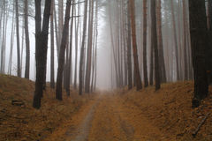 Autumn forest in the morning mist Royalty Free Stock Images