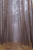 Autumn forest in the morning mist Stock Images