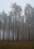 Autumn forest in the morning mist Royalty Free Stock Photography