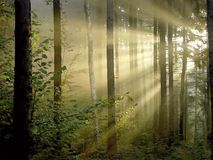 Autumn forest with morning sunbeams stock photo