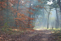 Autumn forest with morning sunlight and coloured leaves. Looks like an impressionist painting. Autumn in a forest with path, coloured leaves and morning royalty free stock photography