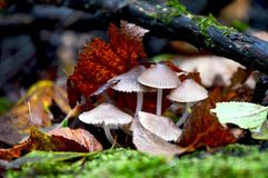 Autumn in the forest in the moss stock image