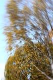 Autumn forest motion blur Stock Image
