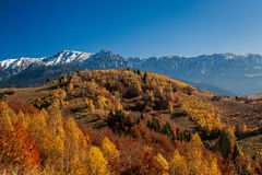 Autumn forest and mountain Stock Image