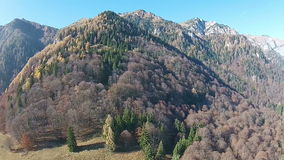 Autumn forest of a mountain ridge, aerial view stock footage