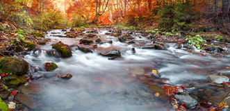 Autumn forest, mountain stream. Beautiful  , rocks covered with moss.  river  rapids and waterfalls. Carpathian. Stock Image