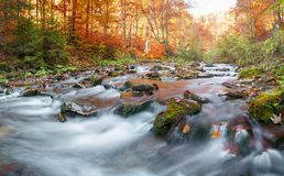 Autumn forest, mountain stream. Beautiful  , rocks covered with moss.  river  rapids and waterfalls. Carpathian. Stock Images