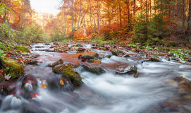 Autumn forest, mountain stream. Beautiful  , rocks covered with moss.  river  rapids and waterfalls. Carpathian. Stock Photos
