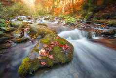 Autumn forest, mountain stream. rocks covered with moss.  river.Carpathian. Royalty Free Stock Photo