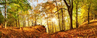 Autumn forest in mountain at sunset with sun stock photo