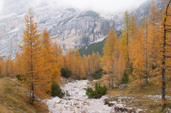 Autumn forest and mountains Stock Photos