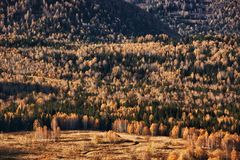 Autumn forest in mountains Stock Image