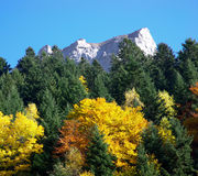 Autumn forest and mountains. Scenic view of autumn forest with mountains in background, Chli Windgaellen, Uri, Switzerland stock photography