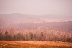 Autumn forest in the mountains. Morning in autumn forest, Hungary Royalty Free Stock Images