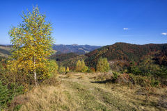 Autumn forest in the mountains.  Royalty Free Stock Images