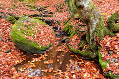 Autumn forest in the mountains.  Stock Images