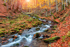 Autumn forest in the mountains.  Royalty Free Stock Photography