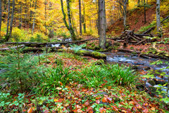 Autumn forest in the mountains.  Stock Photos