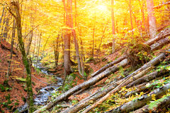Autumn forest in the mountains.  Stock Photo