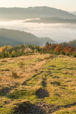 Autumn forest in the mountains.  Stock Photography