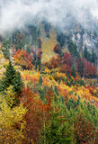 Autumn forest in mountains Stock Images