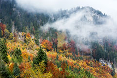 Autumn forest in mountains Stock Photo