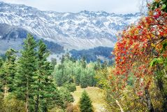Autumn forest in the mountains Royalty Free Stock Image