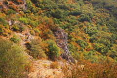 Autumn forest in the mountains colored top view. Autumn yellow red and green forest in the mountains view from above Royalty Free Stock Photos