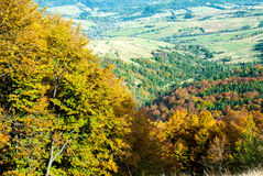 Autumn forest in mountains. Colorful fall trees in mountains Royalty Free Stock Images