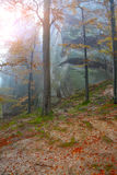 Autumn forest in the mountains. Fallen leaves Royalty Free Stock Image