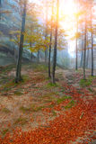 Autumn forest in the mountains. Fallen leaves Royalty Free Stock Images