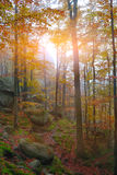 Autumn forest in the mountains. Fallen leaves Stock Photography
