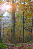 Autumn forest in the mountains. Fallen leaves Stock Photo