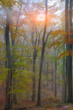Autumn forest in the mountains. Fallen leaves Stock Image