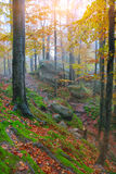 Autumn forest in the mountains. Fallen leaves Royalty Free Stock Photo